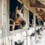 Wood pellets for horse bedding: What are the advantages?