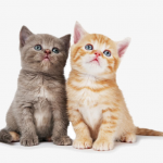 Looking for Inexpensive Biodegradable Cat Litter? Try Wood Pellets!